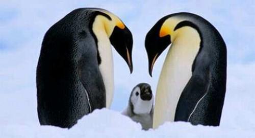pinguinos lindos
