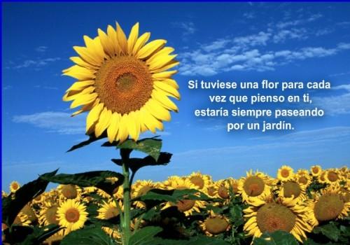 postales de flores para facebook amor
