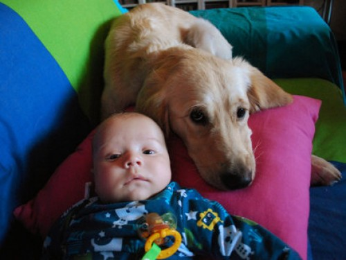 perro cuidando a bebe
