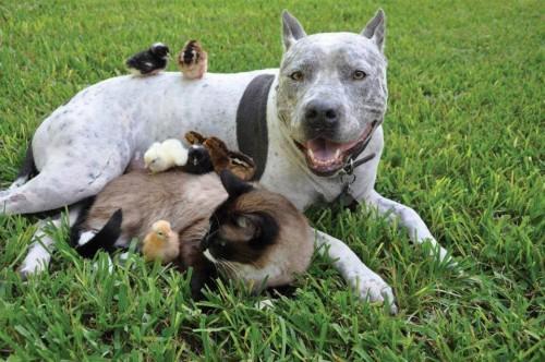 armonia animal