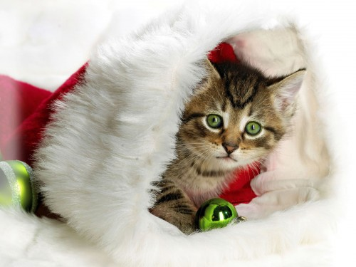 lindo gatito navideño