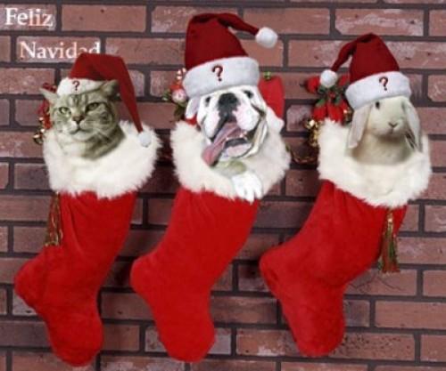 navidad de animales