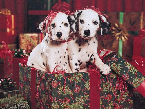 perritos navideños