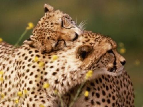 Imagenes de amor animal