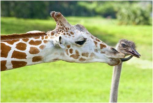 amistad animal
