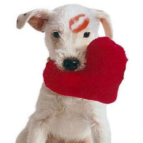Imagenes de animalitos para el dia de San Valentin