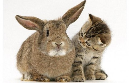 Amistad entre Animales