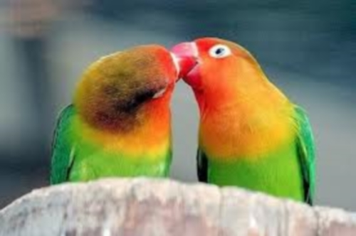 besos animales