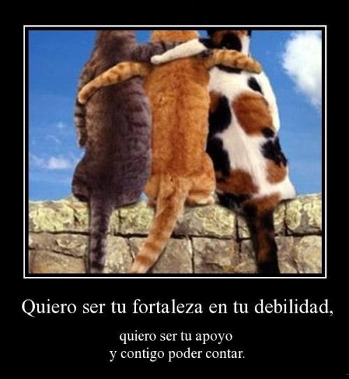 desmotivaciones de amistad animal