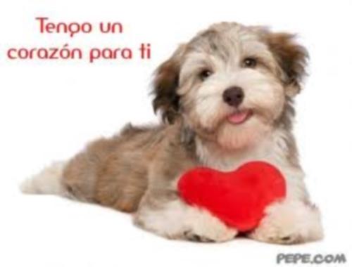 tengo un corazon para ti