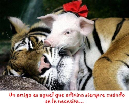 imagenes de animales con frases de amistad