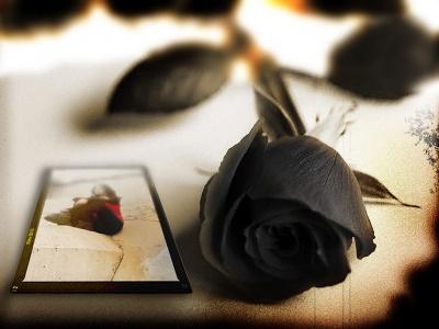 rosas muerte 1