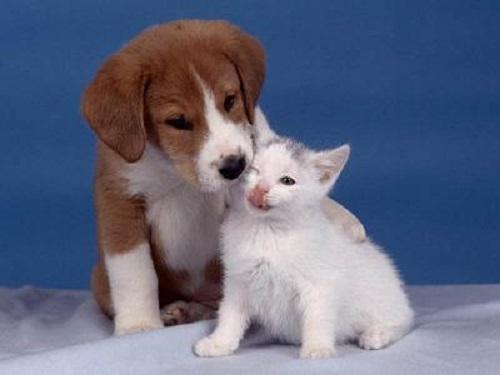 Imágenes tiernas de cachorritos con gatitos