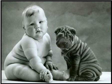 fotos-de-perros-bebes-gorditos