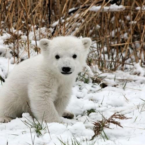 paisajes-de-animales-bebes-oso