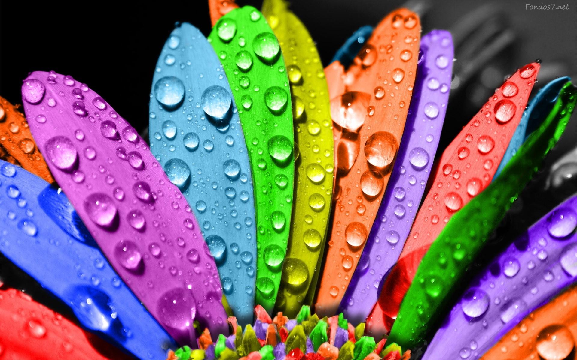 petalos-de-colores-2467